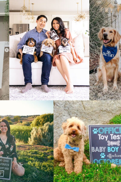 dog pregnancy announcement collage