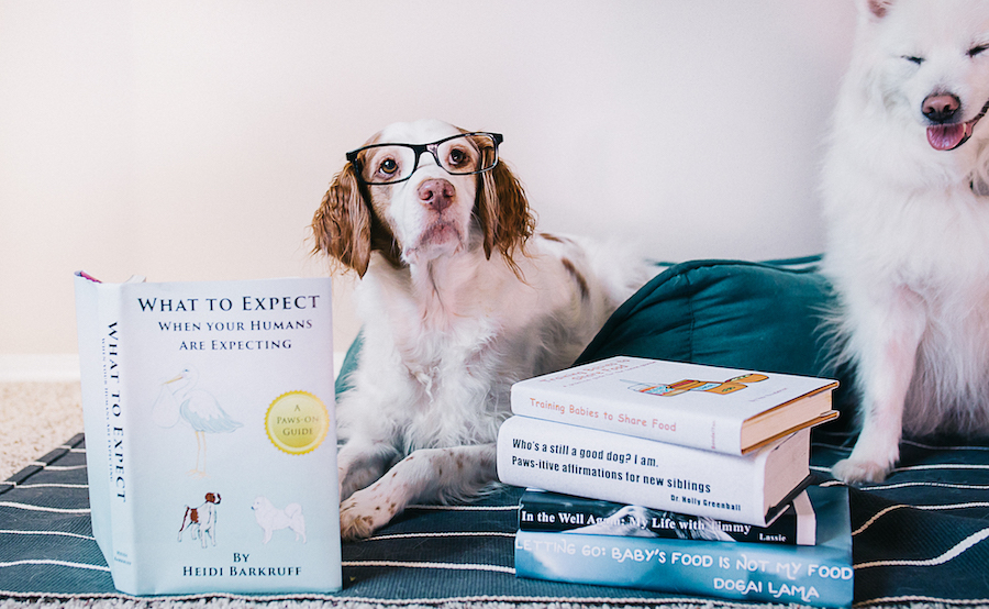 dogs reading books to announce pregnancy