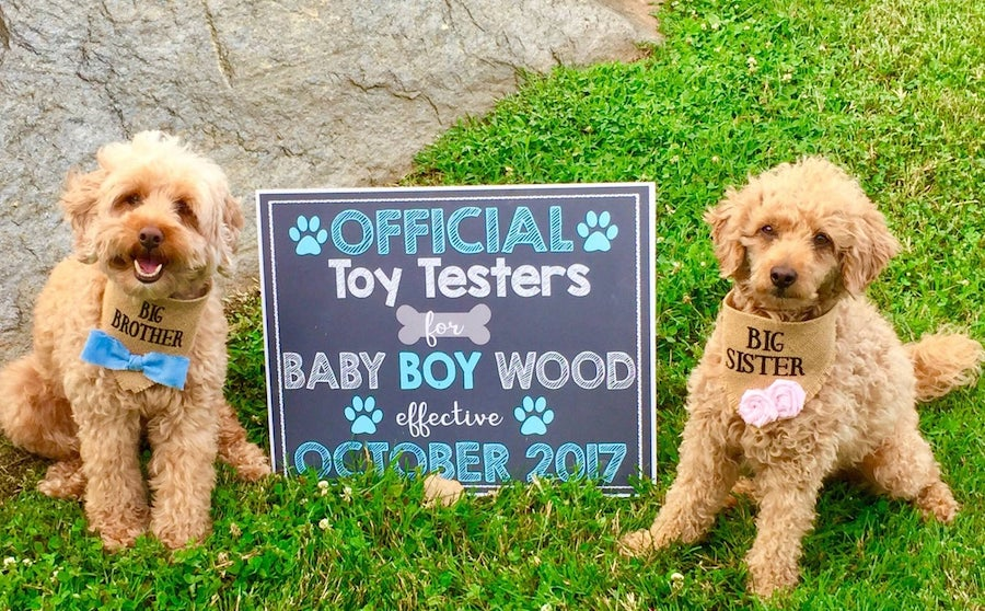 toy testers sign and dogs to announce new baby
