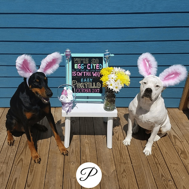 dogs wearing bunny ears for a Spring pregnancy announcement