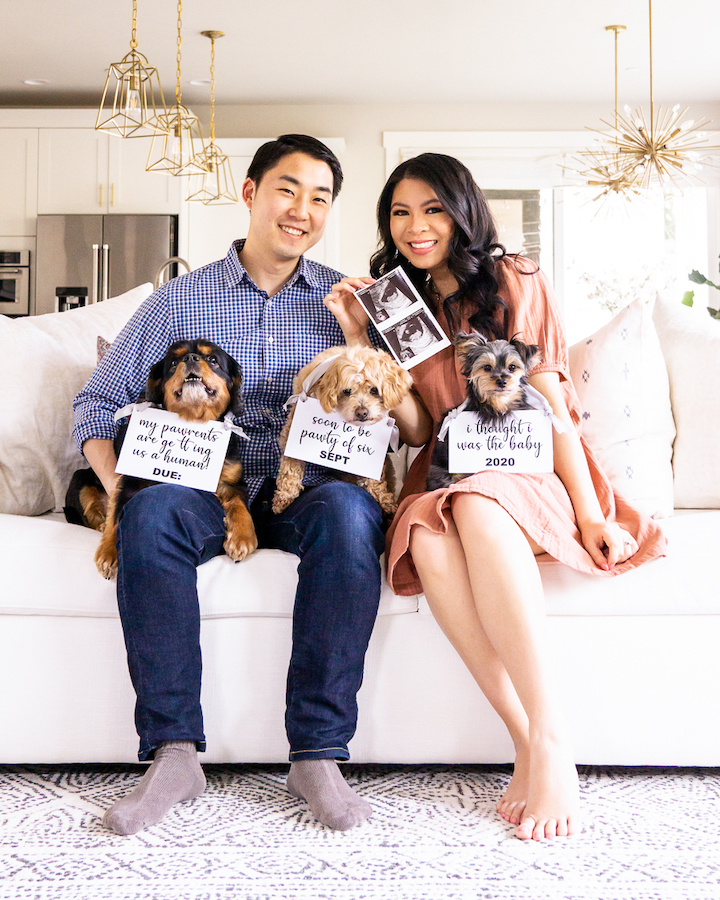 party of six - dog pregnancy announcement