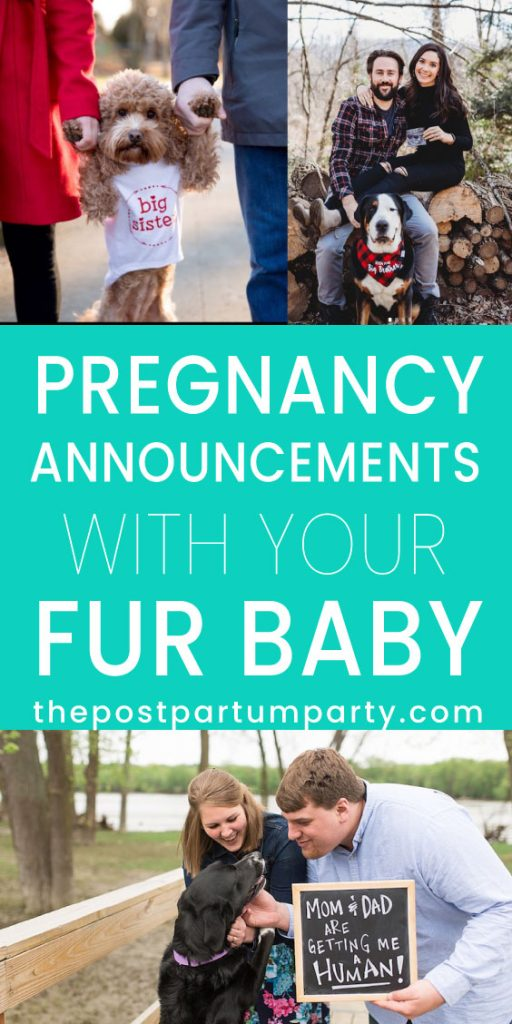 dog pregnancy announcement pin image