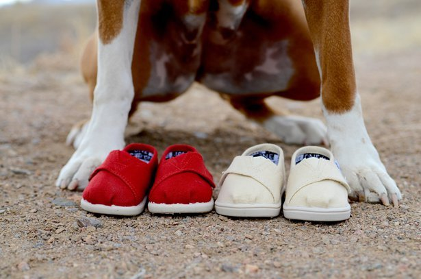 dog with two pairs of baby shoes for twin pregnancy announcement